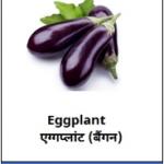 Eggplant( बैंगन) 1 Kg.