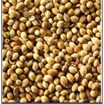 Khada Dhaniya 250 gm.