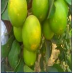 Sharbati Nimbu & Lemon Juicy – 1Kg.